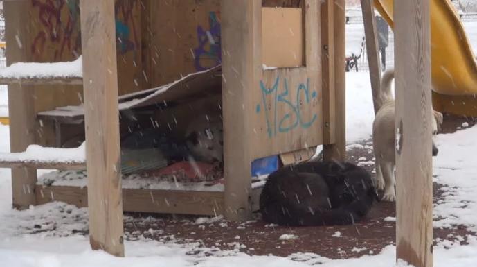 Кучиња во зима